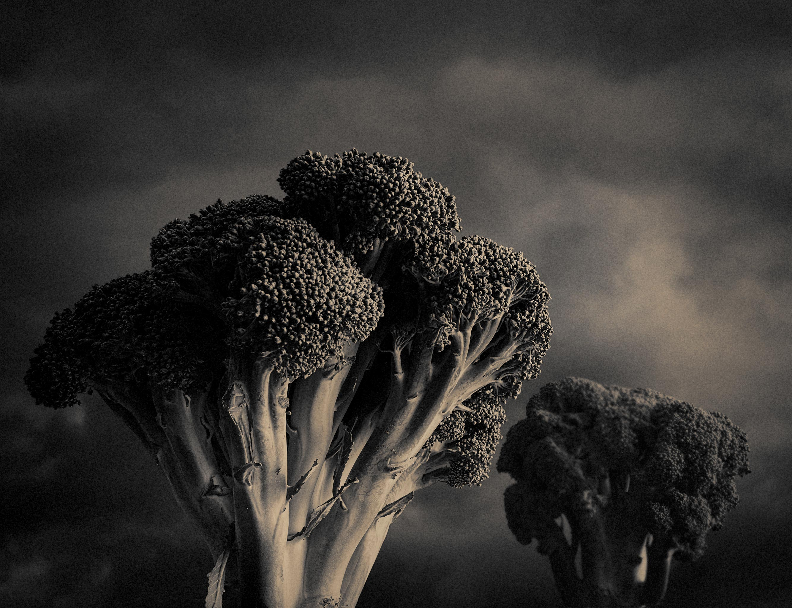 broccoli-trees_8491-w